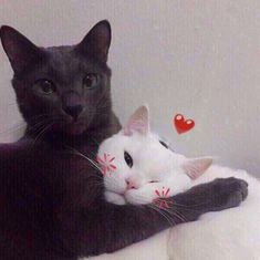 Cute Baby Cats, Cute Cats And Kittens, I Love Cats, Cool Cats, Animal Original, Baby Animals, Cute Animals, Cat Couple, Cat Aesthetic