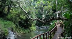 Maya Ubud Resort, un Paraiso Tropical en Bali, Indonesia Ubud Resort, Resort Villa, Resort Spa, Ubud Hotels, Hotels And Resorts, Best Hotels, Luxury Hotels, Luxury Travel, Cabana
