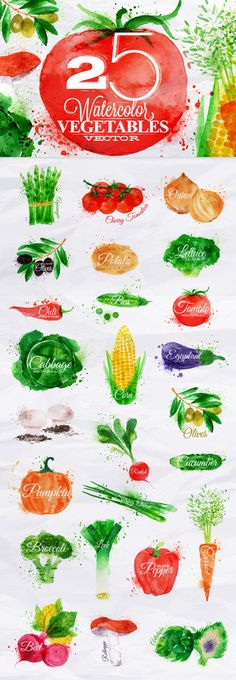 Vegetables Watercolor by Anna on @creativemarket