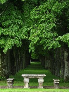 I would love a beautiful bench like this in my garden to sit and soak up the beauty