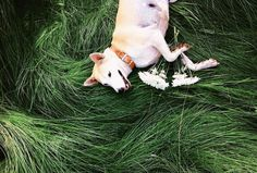 Gluta, The Happiest Dog In The World   iGNANT.de