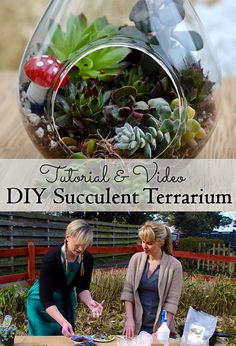 Succulent Terrariums are easy and inexpensive to plant up and make great gifts! In this diy tutorial, a confessed brown-thumb shows us how to make them from both purchased and salvaged materials!  Youtube link: http://buff.ly/1JqOuF1 #succulents