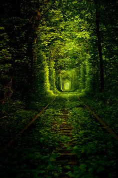 Tunnel of Love in Ukraine (Kleven village forest) - nature overgrows the train track, but the train keeps a route through