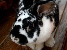 Resplendent rabbit #rabbitlover