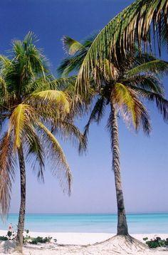 Cocotier Varadero - Varadero, Matanzas Cuba http://www.cuba-junky.com/matanzas/varadero-home.htm