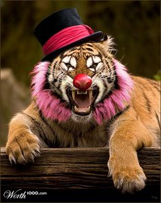 Animal Clowns - Worth1000 Contests