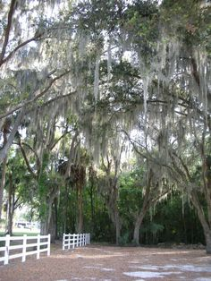 Orlando. I love the trees with moss