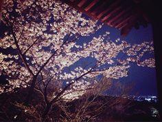 2014 Spring Kiyomizu Temple