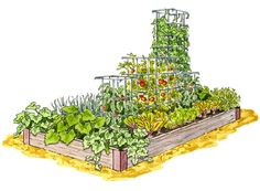 Plant it and Forget it Garden.  (Plant late spring and harvest mid-summer.) #Garden #herbs #veggies