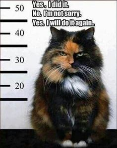 "Oh those torties!! -- Love the ""tortie-tude!"""