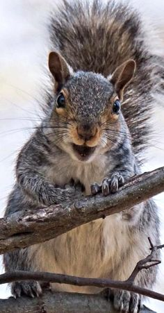 "Hi! Welcome to ""Feelin' Squirrely.""  Please feel free to comment..."