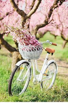 Isn't spring just great! Flowers are blooming in bicycle baskets! Have fun this spring Velo Vintage, Vintage Stil, Vintage Bicycles, Peach Blossoms, Peach Blossom Tree, Peach Trees, Spring Blossom, Jolie Photo, Hello Spring