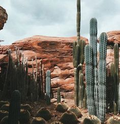 Photo (wonder / wander) - Wandering through the cactus filled desert. You are in the right place about Cactus crochet Here we - Landscape Photography, Nature Photography, Cactus Photography, Photography Tips, Landscape Arquitecture, Desert Dream, Desert Life, Desert Trip, Photos Voyages