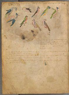 The Illuminated Sketchbook of Stephan Schriber (1494)