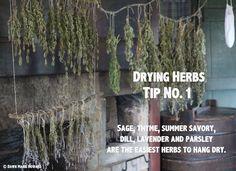 Drying Herbs: Tips for Preserving Garden Herbs - Modern Dry Garden, Indoor Garden, Healing Herbs, Medicinal Plants, Organic Gardening, Gardening Tips, Vegetable Gardening, Culture D'herbes, Small Backyard Landscaping
