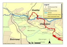 Travelling Lion Turns a Spotlight on the Species - http://zambezitraveller.com/hwange/conservation/travelling-lion-turns-spotlight-species (Graphic credit: Hwange Lion Research)