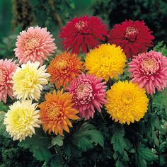 Top 10 Best Perennials for Your Garden