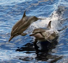 Known for their empathy and playfulness, dolphins also have one of the most advanced communication systems among all animals. Starting from birth, they develop a complicated language of squawks, whistles, clicks, and squeaks. They even communicate nonverbally through body postures, jaw claps, bubble blowing, and fin caresses.....With brains that are about 25 percent larger than a human's, dolphins can also reason, problem-solve, and comprehend ideas.