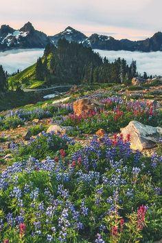 mountain lake field of flowers