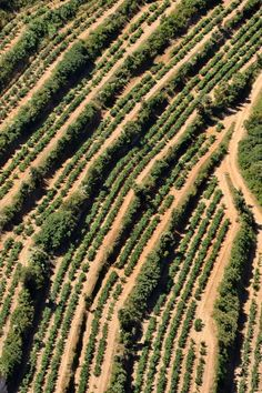 Vineyards on Mediterranean coast, Cassis, France. Photo: Sami Sarkis