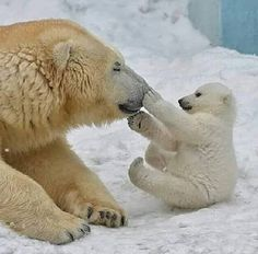 Love Cute Animals shares pics of playful animals, cute baby animals, dogs that stay cute, cute cats and kittens and funny animal images. Cute Creatures, Beautiful Creatures, Animals Beautiful, Nature Animals, Animals And Pets, Wild Animals, Cute Baby Animals, Funny Animals, Photo Ours