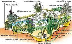 Teichbepflanzung Plant pond - good to know Marigolds In Garden, Growing Marigolds, Slugs In Garden, Garden Pests, Water Garden, Cactus House Plants, Pond Plants, Indoor Cactus, Cactus Cactus