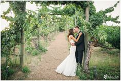 Wedding: Kyle & Rachel // Wilson Creek Winery, Temecula, CA» Analisa Joy Photography