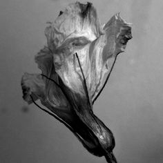 Domesticated: Dead Flowers, Decay and Beauty Object Photography, Life Photography, Decay Art, Billy Kidd, Growth And Decay, Flower Artists, High Art, Patterns In Nature, Art Projects