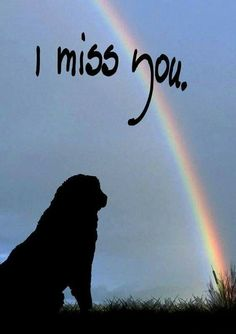 The Rainbow Bridge is a classic poem about cat and doggie heaven, written to bring comfort and peace to the heart of a person experiencing the pain of pet loss grief. Dog Quotes, Animal Quotes, Humor Quotes, I Love Dogs, Puppy Love, Der Boxer, Animals And Pets, Cute Animals, Miss My Dog