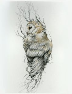 Barn owl -11 x 14 reproduction of original drawing by NestandBurrow on Etsy https://www.etsy.com/listing/217204716/barn-owl-11-x-14-reproduction-of