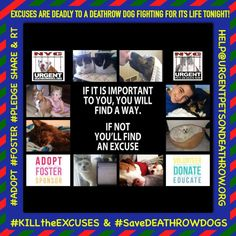 EXCUSES R DEADLY 4 A #DeathrowDog  #KILLtheEXCUSES #SaveDEATHROWDOGS  #ADOPT #FOSTER SHARE RT https://www.facebook.com/Urgentdeathrowdogs/photos/a.611290788883804.1073741851.152876678058553/944441485568731/?type=3&theater…