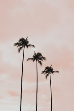 Look Wallpaper, Summer Wallpaper, Tree Wallpaper, Iphone Background Wallpaper, Aesthetic Pastel Wallpaper, Aesthetic Backgrounds, Aesthetic Wallpapers, Blush Pink Wallpaper, Baby Pink Aesthetic