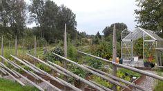 Kasvimaa aidattu heinäseipäillä. Peurat ovat nyt pysyneet poissa. Herbs, Texture, Vegetables, Wood, Garden, Crafts, Surface Finish, Garten, Manualidades