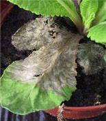 Perennat, marjat ja ruusut Unelmapuutarhaasi | Puutarha.com Growing Orchids, Orchid Care, Plantar, Natural, Cabbage, Vegetables, Hibiscus, Gardens, Take Care