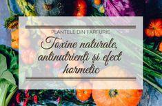 Ghid nutritie LCHF: Ce NU mancam? Alimente pe care nu le dai nici dusmanilor | Beauty from Nature