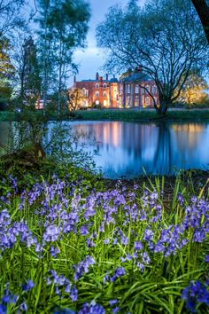 Blue bells in spring and a house in full swing - Iscoyd Park in all it's magnificent glory - available for your dream event!
