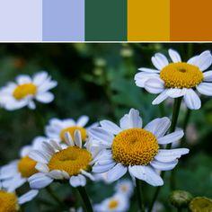 《White Petals Palette》