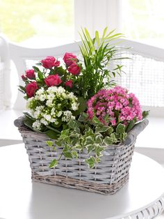 Full of textures and variety, this gift is a miniature garden perfect for enjoying inside. We've chosen a pink rose plant, pink and white flowering kalanchoes as well as ivy and palm. The result is a pretty display of colour and greenery that they are sure to admire.<br /><br />Featuring a pale pink kalanchoe, a white kalanchoe, a pink rose plant, ivy and palm, all planted in a grey washed woven basket.