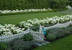 Stunning White Hydrangea Garden -this could be what I put at the front behind the box Formal Gardens, Outdoor Gardens, Garden Cottage, Home And Garden, Easy Garden, White Hydrangea Garden, Limelight Hydrangea, Landscape Design, Garden Design