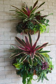 tropical landscaping Your Patio is Missing Bromeliads - D Magazine Tropical Patio, Tropical Garden Design, Tropical Landscaping, Landscaping With Rocks, Tropical Plants, Tropical Gardens, Patio Plants, Outdoor Plants, House Plants