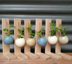 Great planter ideas - would be good to recycle coconut shells like this