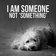 Open your heart to a shelter pet. Adopt, don't shop!