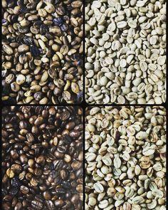 10/365 #コーヒー豆の焙煎過程#コーヒーの木#育てたい#苗買えるのか#生豆から焙煎すると美味い#でも部屋が焦げくさい#換気扇回すと寒い#coffee#coffeebeans#beans#japan#iphone by suessaw