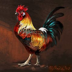 rooster paintings | rufus the rooster by reptangle traditional art paintings animals 2011 ...