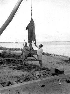Hemingways marlin