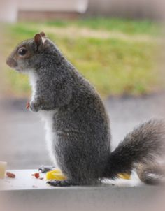 squirrel pic one