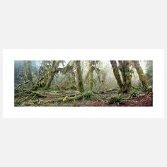 Hoh Forest II Photo Print  by Chris Crisman