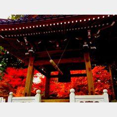 秋の鐘楼  autumn bell tower