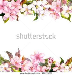 Retro Pink Flowers Apple Cherry Blossom Floral Frame For Vintage Greeting Card Aquarelle