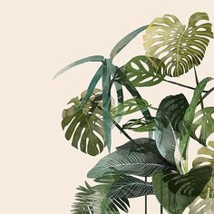 Botanic  #foliage #illustration